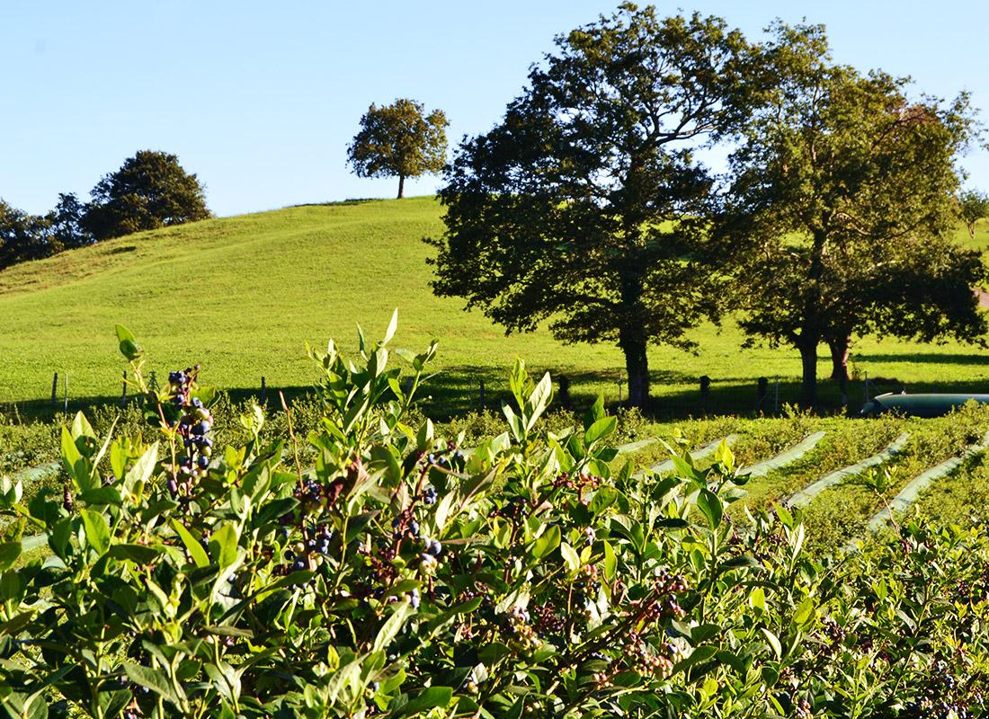 Granja ecológica el Valle de Machucón